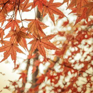 9月トライアルメニュー 紅葉写真 0906